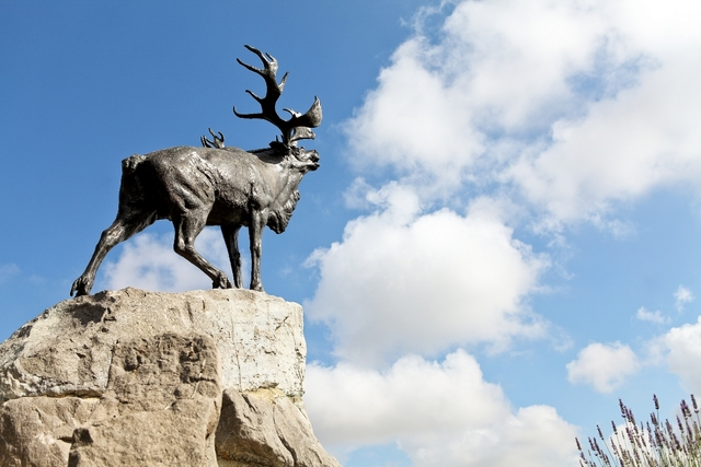 le Caribou de Beaumont Hamel photos muse compresses